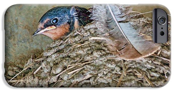 Barn Swallow iPhone Cases - Barn Swallow Fledgling - Baby Bird in Nest iPhone Case by Nikolyn McDonald
