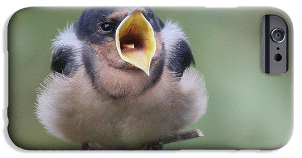 Barn Swallow iPhone Cases - Barn Swallow iPhone Case by Joe Sweeney