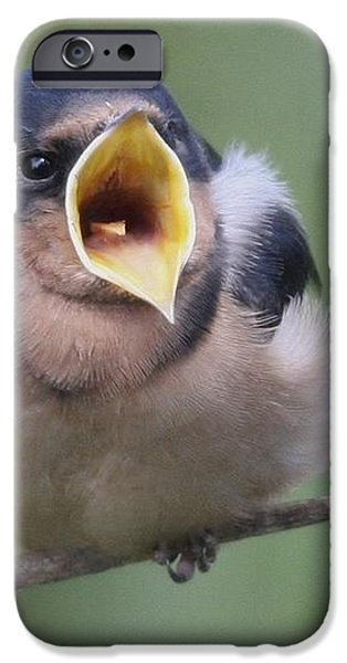 Barn Swallow iPhone Case by Joe Sweeney
