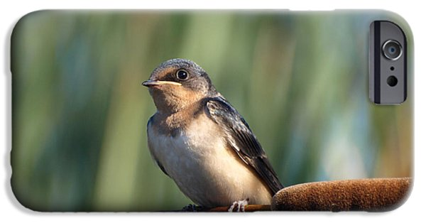 Barn Swallow iPhone Cases - Barn Swallow iPhone Case by James Peterson