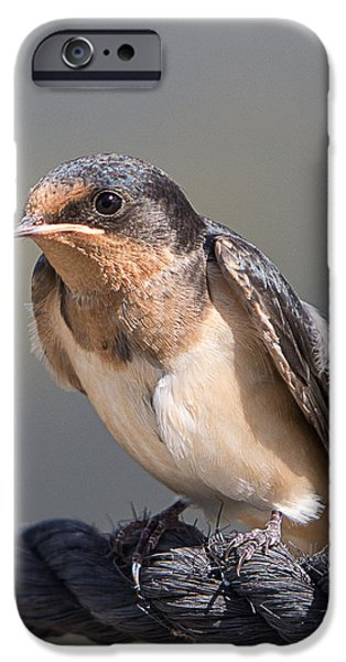 Barn Swallow on Rope I iPhone Case by Patti Deters