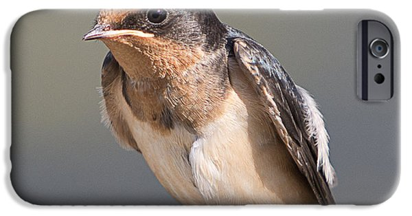 Barn Swallow iPhone Cases - Barn Swallow on Rope I iPhone Case by Patti Deters