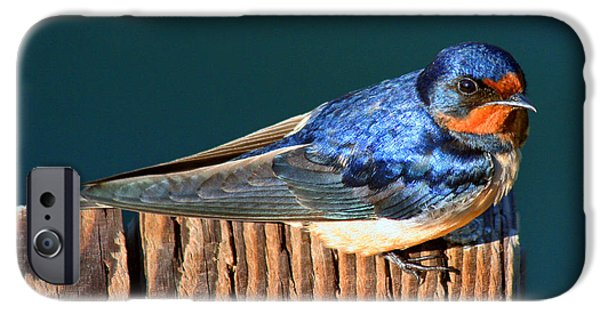 Best Sellers -  - Barn Swallow iPhone Cases - Barn Swallow Perching iPhone Case by Bob and Jan Shriner