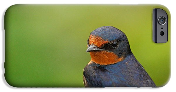 Barn Swallow iPhone Cases - Barn Swallow Portrait  iPhone Case by David Cutts