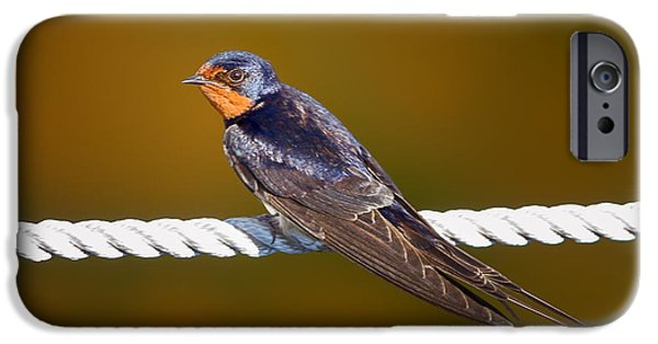 Barn Swallow iPhone Cases - Barn Swallow iPhone Case by Todd Bielby