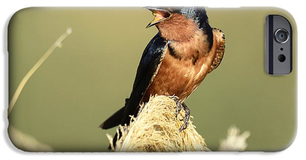 Barn Swallow iPhone Cases - Barn Swallow Warbling iPhone Case by Dennis Hammer