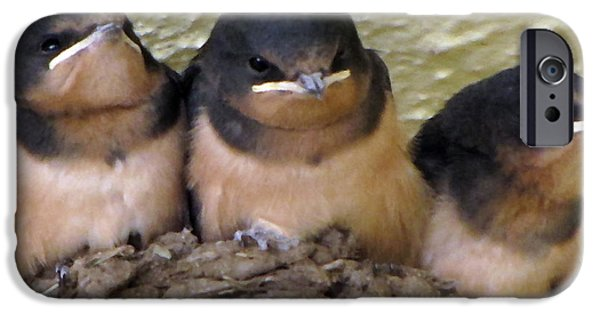 Swallow Chicks iPhone Cases - Barn Swallows 1 iPhone Case by Roger Reeves  and Terrie Heslop