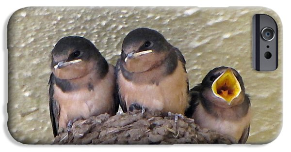 Swallow Chicks iPhone Cases - Barn Swallows 2 iPhone Case by Roger Reeves  and Terrie Heslop