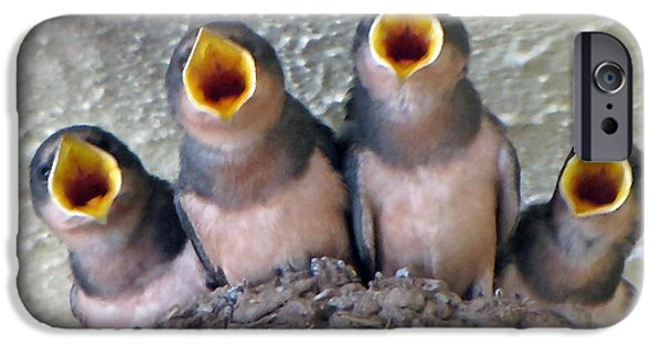 Swallow Chicks iPhone Cases - Barn Swallows 3 iPhone Case by Roger Reeves  and Terrie Heslop