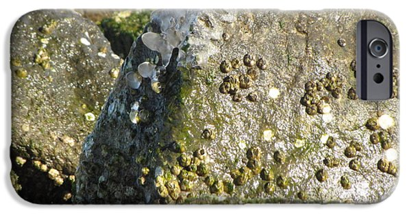 Alga iPhone Cases - Barnacles on rocks at Sandy Point iPhone Case by Ben Schumin