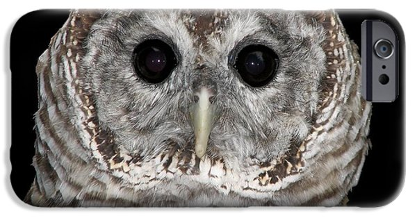 Artists4god iPhone Cases - Barred Owl 3 iPhone Case by Rose Santuci-Sofranko