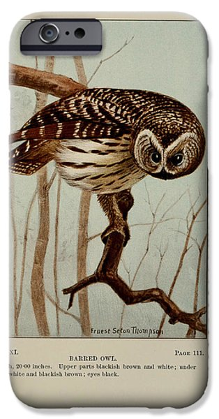 Dentist Drawings iPhone Cases - Barred Owl iPhone Case by Ernest Seton Thompson