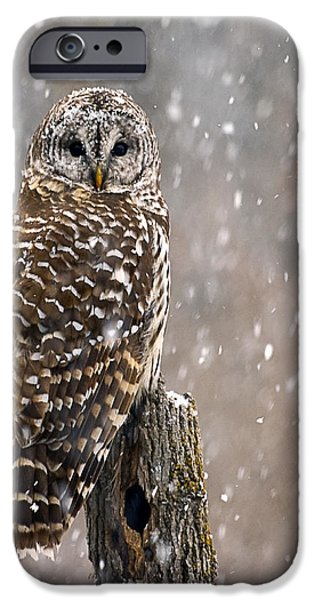 Winter Storm iPhone Cases - Barred Owl in a New England Snow Storm iPhone Case by John Vose