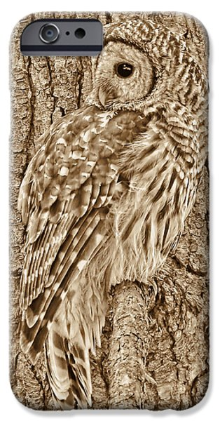 Barred Owl iPhone Cases - Barred Owl in Sepia iPhone Case by Jennie Marie Schell