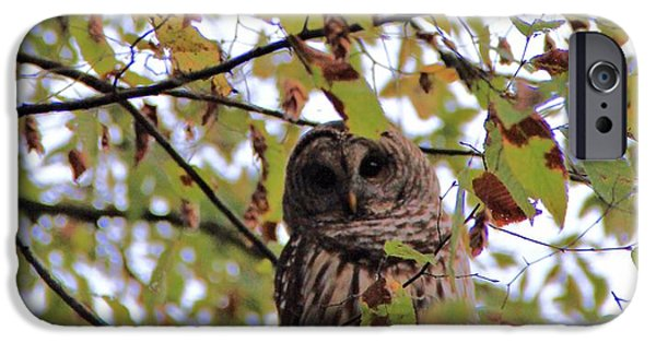 Barred Owl iPhone Cases - Barred Owl In Virginia iPhone Case by Dan Sproul