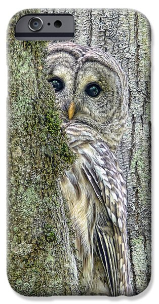 Grey Photographs iPhone Cases - Barred Owl Peek a Boo iPhone Case by Jennie Marie Schell
