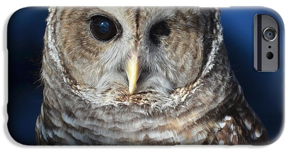 Dentist Drawings iPhone Cases - Barred Owl iPhone Case by Philip Ralley