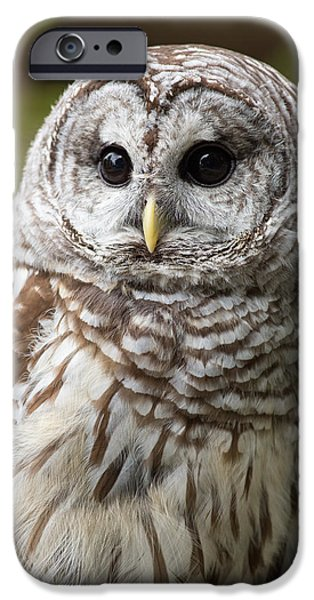Barred Owl iPhone Cases - Barred Owl Portrait iPhone Case by Dale Kincaid