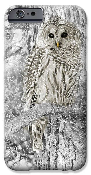 Tan iPhone Cases - Barred Owl Snowy Day in the Forest iPhone Case by Jennie Marie Schell