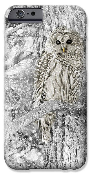 Animal Photographs iPhone Cases - Barred Owl Snowy Day in the Forest iPhone Case by Jennie Marie Schell