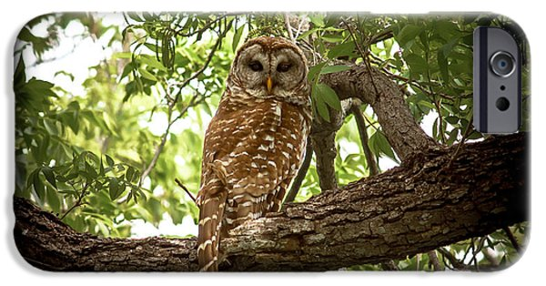 Barred Owl iPhone Cases - Barred Owl Under Canopy iPhone Case by Robert Frederick