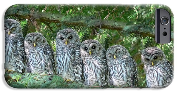 Grey Photographs iPhone Cases - Barred Owlets Nursery iPhone Case by Jennie Marie Schell