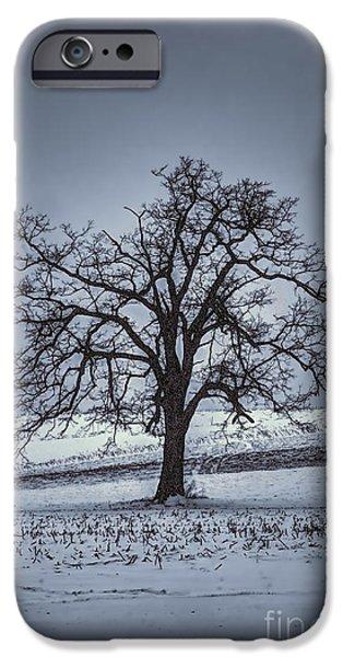 barren winter scene with tree iPhone Case by Dan Friend