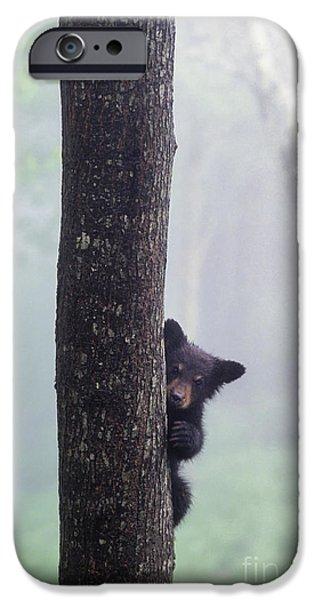 Best Sellers -  - Mist iPhone Cases - Bashful Bear Cub - FS000230 iPhone Case by Daniel Dempster