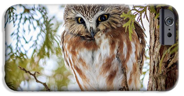 Little Pyrography iPhone Cases - Bashful Owl iPhone Case by Rebecca Brooks
