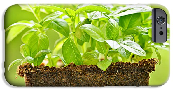 Grow iPhone Cases - Basil iPhone Case by Elena Elisseeva