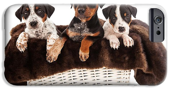 Dog Rescue iPhone Cases - Basket of Rottweiler Mixed Breed Puppies iPhone Case by Susan  Schmitz