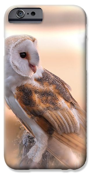 Disc iPhone Cases - Basking In The Morning Sun iPhone Case by Mary Lou Chmura