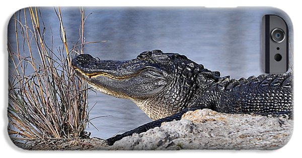 Alligator iPhone Cases - Basking on the Beach iPhone Case by Al Powell Photography USA