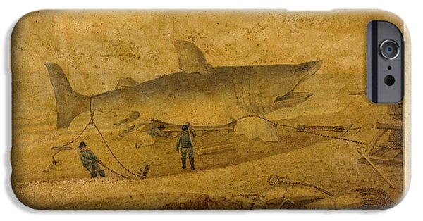 Nineteenth iPhone Cases - Basking Shark, 19th Century Artwork iPhone Case by Natural History Museum, London