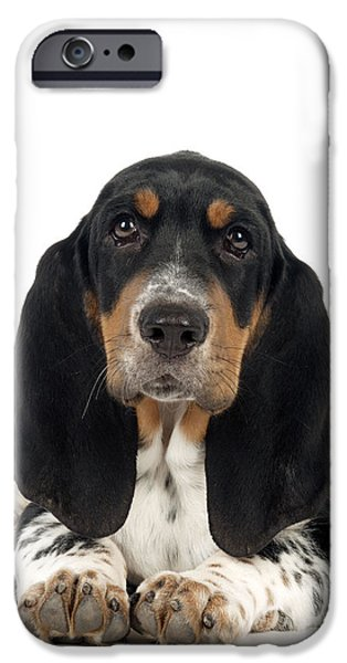 Dog Close-up iPhone Cases - Basset Hound Puppy Dog iPhone Case by John Daniels
