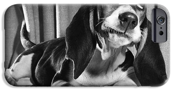 Animal Portraiture iPhone Cases - Basset Hound Puppy iPhone Case by ME Browning
