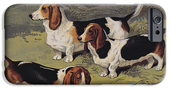 Mammals Drawings iPhone Cases - Basset Hounds iPhone Case by English School