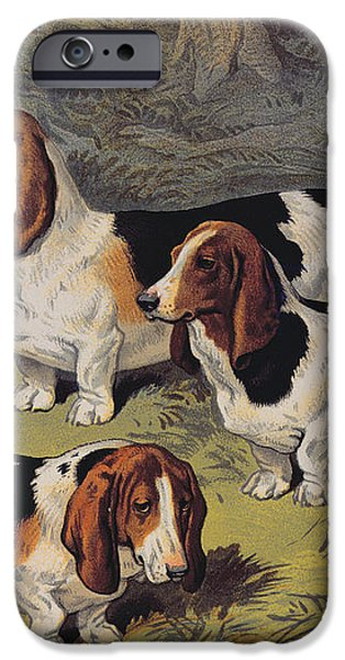 Basset Hounds iPhone Case by English School