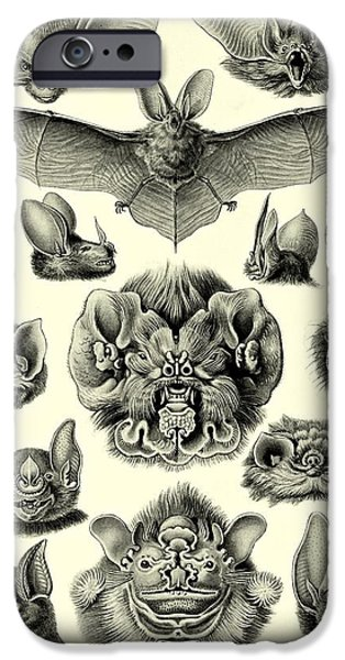 Bat Digital Art iPhone Cases - Bat Bats Haeckel Chiroptera Mammals Microchiroptera iPhone Case by Movie Poster Prints