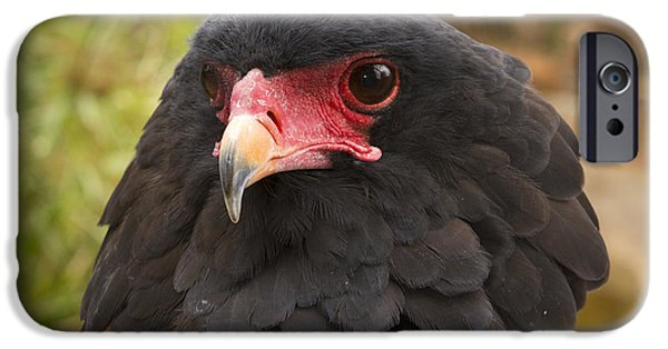 Recently Sold -  - Fauna iPhone Cases - Bateleur Eagle Zimbabwe iPhone Case by Michael Durham