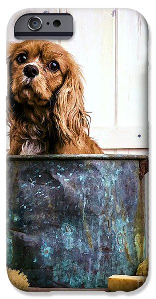 Cute Puppy Photographs iPhone Cases - Bath Time - King Charles Spaniel iPhone Case by Edward Fielding
