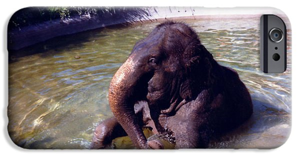 Bathing iPhone Cases - Bathing Elephant iPhone Case by Barbara Snyder