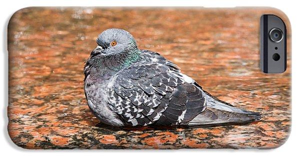 Pleasure iPhone Cases - Bathing Pigeon 08 iPhone Case by Alexander Senin