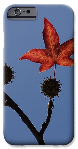 Tree. Sycamore iPhone Cases - Be Happy iPhone Case by Ernie Echols