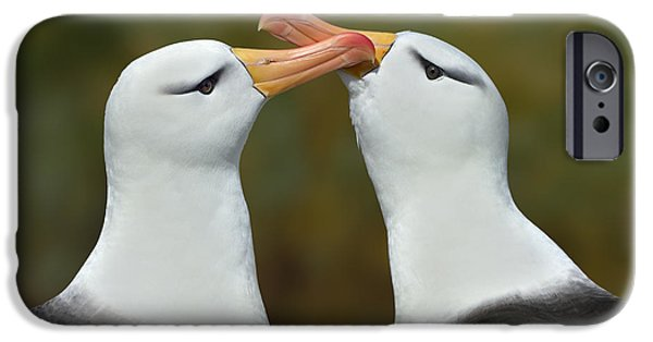 Albatross iPhone Cases - Be My Valentine iPhone Case by Tony Beck