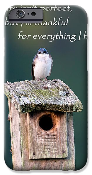 Swallow iPhone Cases - Be Thankful iPhone Case by Bill  Wakeley