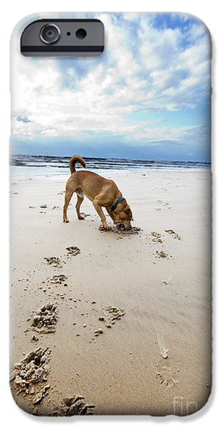 Beach Dog iPhone Case by Eldad Carin