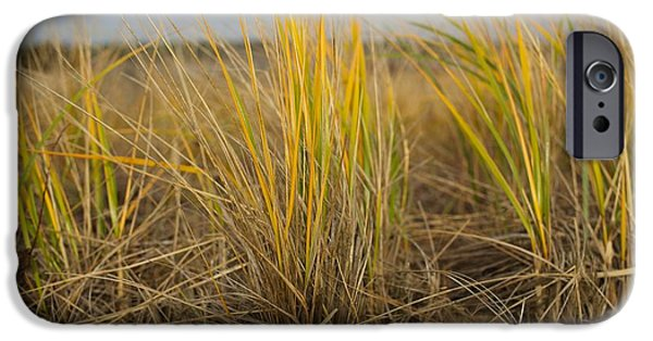 Mashpee iPhone Cases - Beach Grass iPhone Case by Allan Morrison