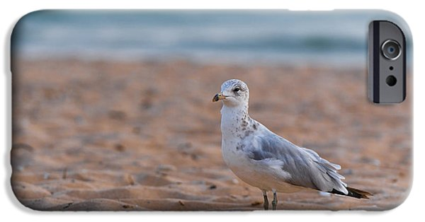 Seagull iPhone Cases - Beach Patrol iPhone Case by Sebastian Musial