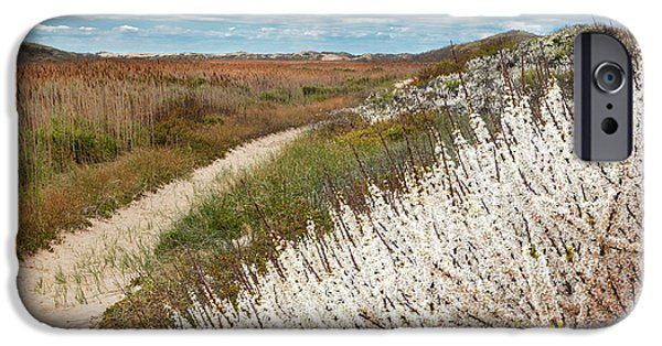 Cape Cod iPhone Cases - Beach Plums iPhone Case by Bill  Wakeley